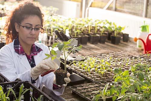 Horticulture Associate Degree Programs